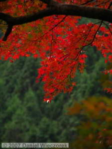 Nov17_OkutamaOldRoad_FallColor89_BESTRC.jpg