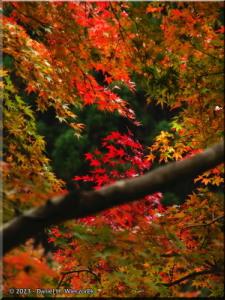 Nov17_OkutamaOldRoad_FallColor90RC.jpg