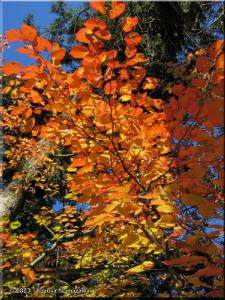 Nov19_MtTakao_FallColors14_BESTRC.jpg