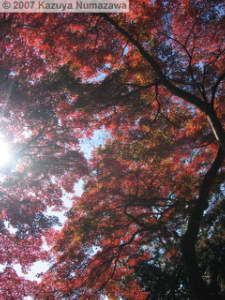 Nov19_MtTakao_FallColors41_SummitRC.jpg