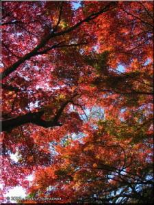 Nov19_MtTakao_FallColors44_SummitRC.jpg