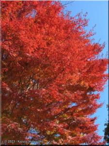 Nov19_MtTakao_FallColors45_Summit_BESTRC.jpg