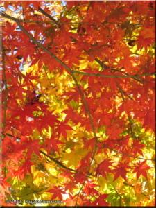 Nov19_MtTakao_FallColors46_Summit_BESTRC.jpg