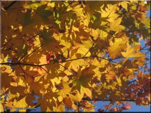 Nov19_MtTakao_FallColors48_SummitRC.jpg