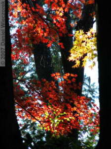 Nov23_TakaoSan_MomijiDaiFallColor30RC.jpg