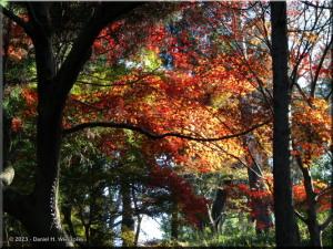Nov23_TakaoSan_MomijiDaiFallColor39RC.jpg