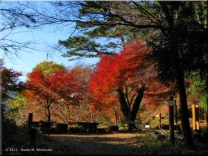 Nov24_MtMitake10_Trail_FallColorRC.jpg