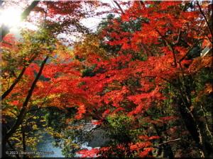 Nov24_TamaRiver160_FallColor_BESTRC.jpg