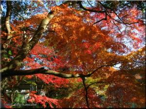 Nov24_TamaRiver51_FallColorRC.jpg