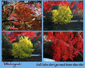 Nov24_TamaRiver_Mitake_FallColor_51_60_65_147RC_Smaller.jpg