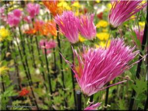 15Nov_JindaiBG_Chrysanthemum10RC.jpg