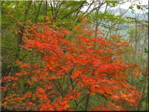 Nov02_Hinode_FallColors01RC.jpg