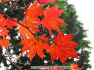 Nov02_Hinode_FallColors04RC.jpg
