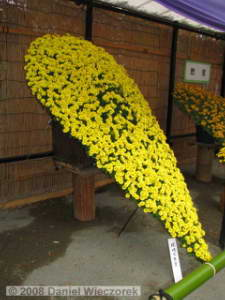 Nov15_JindaiBG_Chrysanthemum06RC.jpg