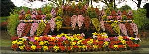 Nov15_JindaiBG_Chrysanthemum17_Waterfall_CollageRC.jpg