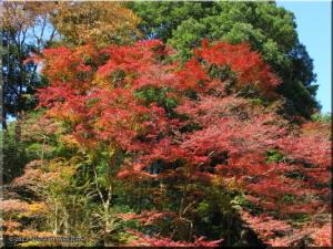 Nov21_Takao_san_FallColors05RC.jpg