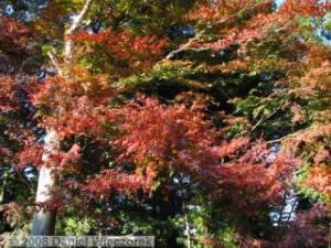 Nov21_Takao_san_FallColors11RC.jpg