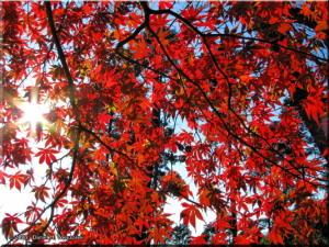 Nov21_Takao_san_MomijiDai_FallColors15RC.jpg