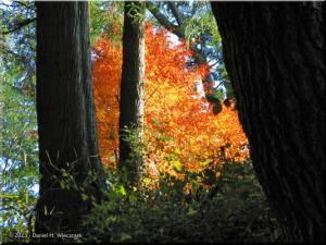 Nov21_Takao_san_MomijiDai_FallColors27RC.jpg