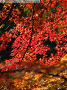 Nov22_Mitake_FallColor07RC.jpg