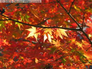 Nov22_Mitake_FallColor37RC.jpg