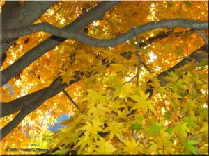 Nov22_Sawai_FallColor02RC.jpg