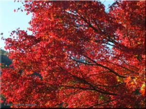 Nov22_Sawai_FallColor07RC.jpg