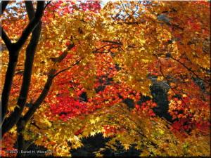 Nov22_Sawai_FallColor17RC.jpg