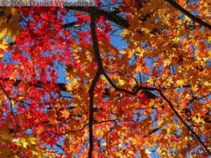 Nov22_Sawai_FallColor24RC.jpg
