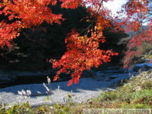 Nov22_Sawai_FallColor40RC.jpg
