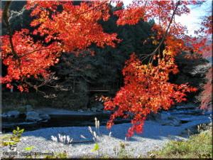 Nov22_Sawai_FallColor41RC.jpg