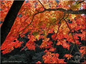 Nov22_Sawai_FallColor48RC.jpg
