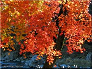 Nov22_Sawai_FallColor52RC.jpg