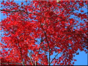 Nov22_Sawai_FallColor66RC.jpg