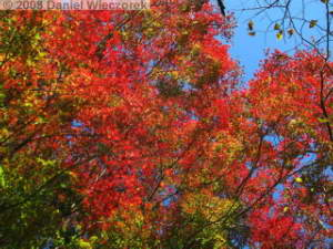 Nov22_Sawai_FallColor80RC.jpg