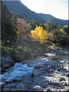 Nov22_Sawai_Mitake056_FallColor_GinkgoRC.jpg