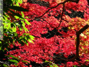 Nov15_Mitake_FallColors13_RC