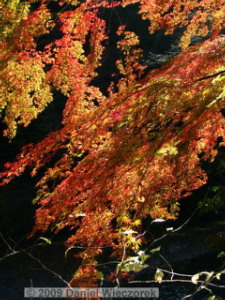 Nov15_Mitake_FallColors17_RC