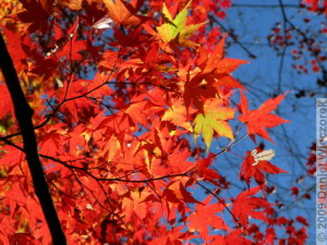 Nov15_Mitake_FallColors27_RC