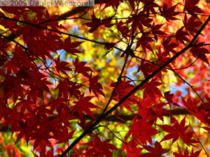 Nov15_Mitake_FallColors33_RC