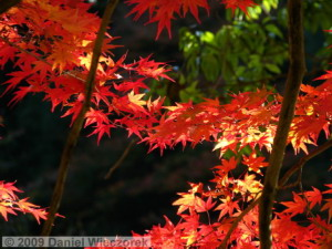 Nov15_Mitake_FallColors40_RC