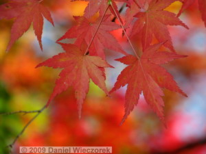 Nov15_Mitake_FallColors59_RC