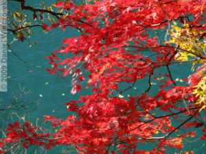 Nov15_OkutamaLakeFallColors59_RC