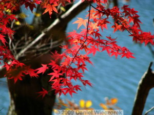 Nov15_OkutamaLakeFallColors63_RC