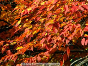 Nov15_OkutamaLakeFallColors77_RC