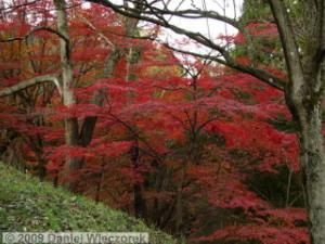 Nov20_MtKobotoke_Shiro_FallColors10RC