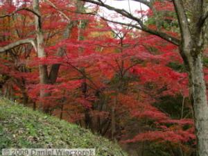 Nov20_MtKobotoke_Shiro_FallColors12RC
