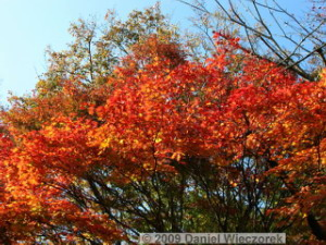 Nov20_Mt_Takao_FallColors07RC