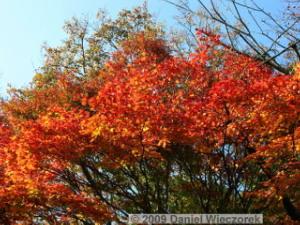 Nov20_Mt_Takao_FallColors07RC