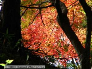 Nov20_Mt_Takao_FallColors09_MomijiDaiRC